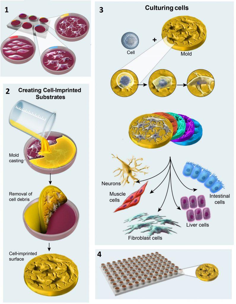 Graphic describing the process of creating NanoBio Interfaces