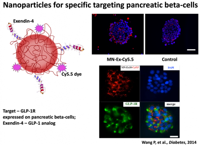 Pictured: Diagram of Nanoparticles for Specific Targeting of Pancreatic Beta-Cells